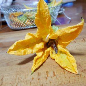 dettaglio fiore di zucca